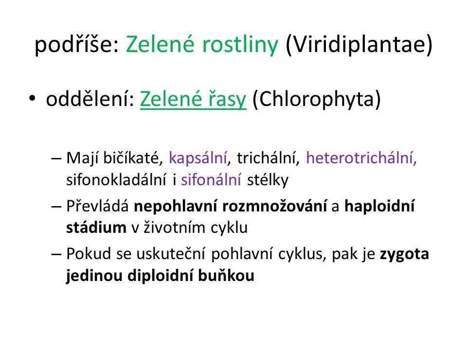 podříše: Zelené rostliny (Viridiplantae)