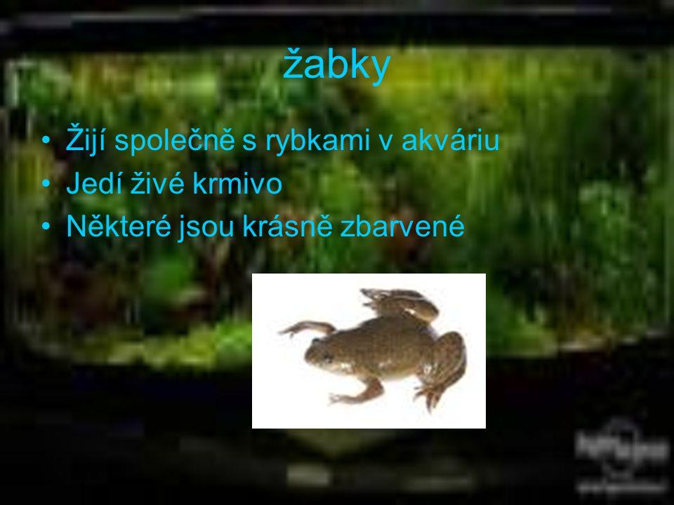 žabky Žijí společně s rybkami v akváriu Jedí živé krmivo