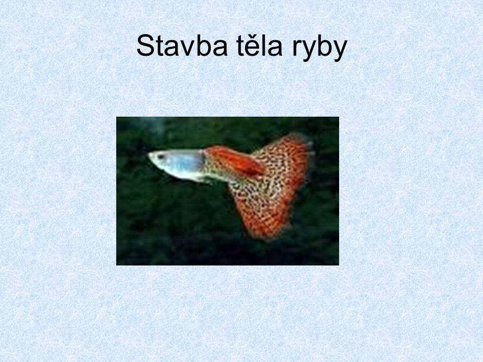 Stavba těla ryby
