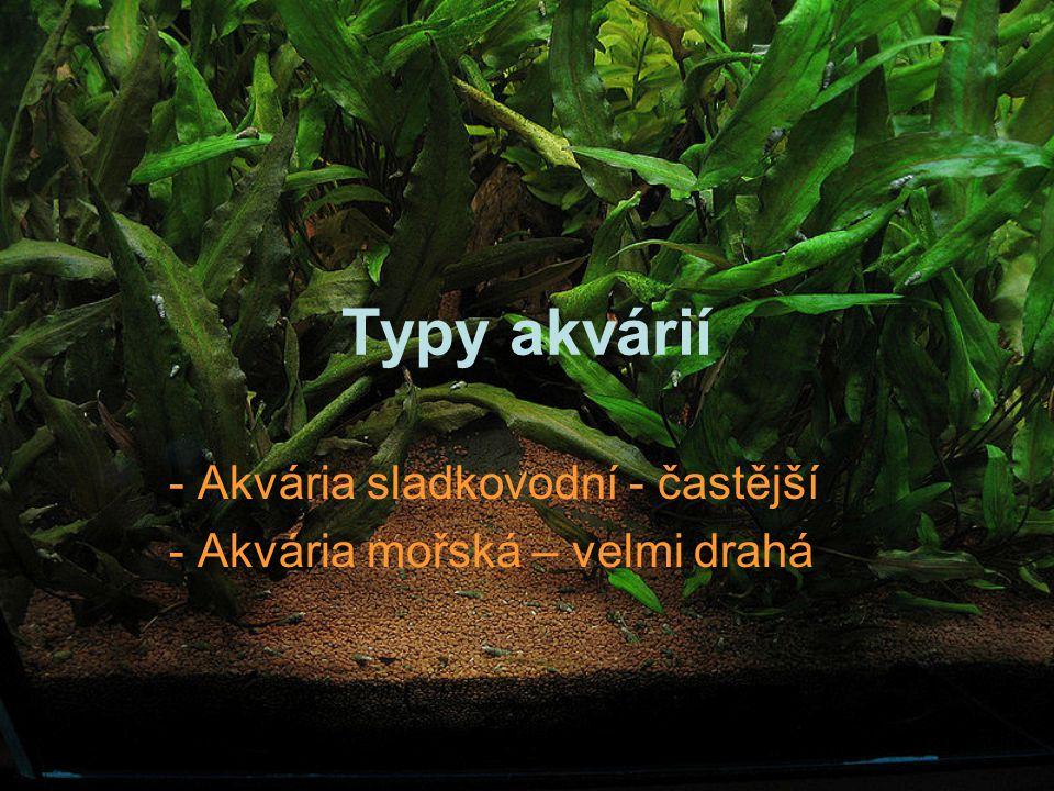 Akvária sladkovodní - častější Akvária mořská – velmi drahá