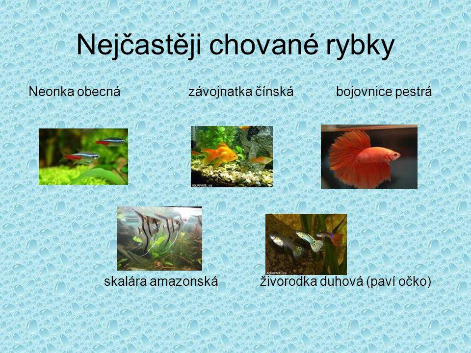 Nejčastěji chované rybky