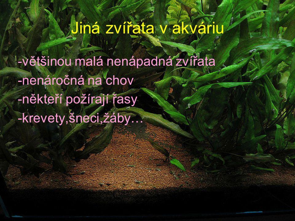 Jiná zvířata v akváriu -většinou malá nenápadná zvířata