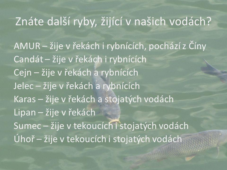 Znáte další ryby, žijící v našich vodách