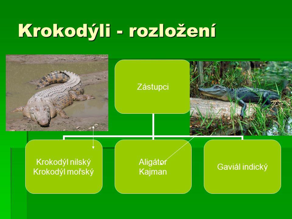 Krokodýli - rozložení