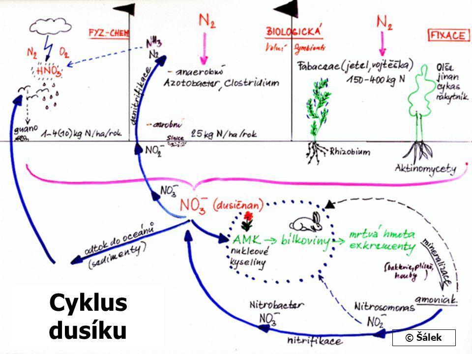 Cyklus dusíku © Šálek