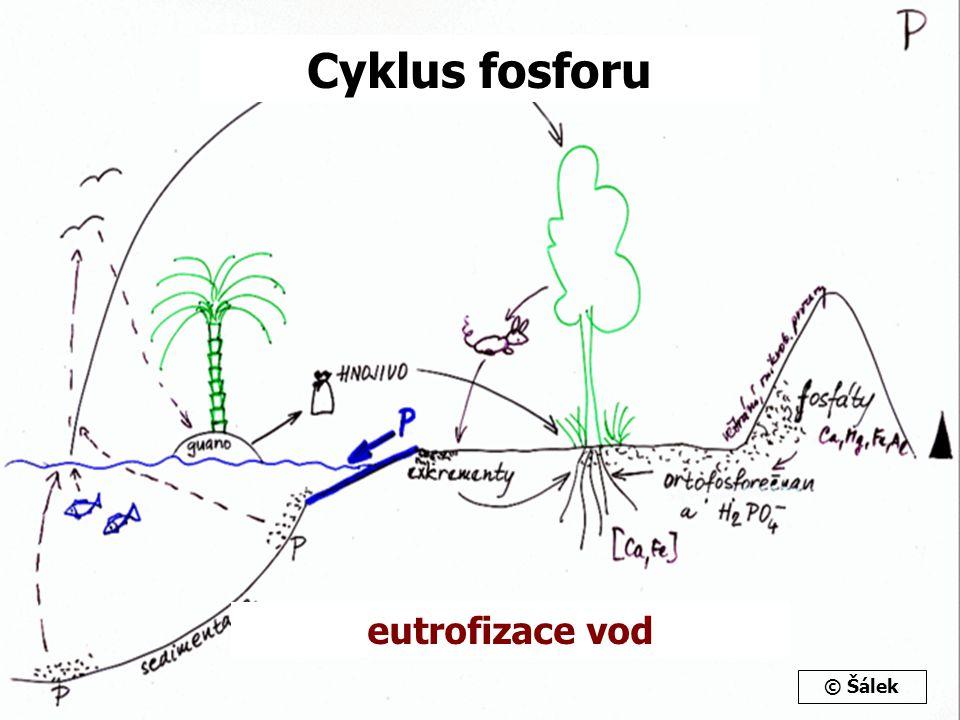 Cyklus fosforu eutrofizace vod © Šálek