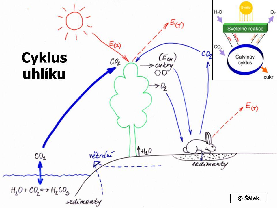 Cyklus uhlíku © Šálek