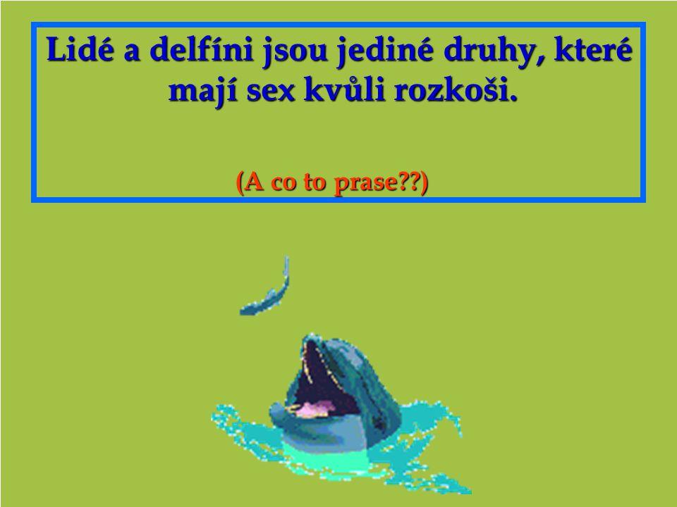 Lidé a delfíni jsou jediné druhy, které mají sex kvůli rozkoši.