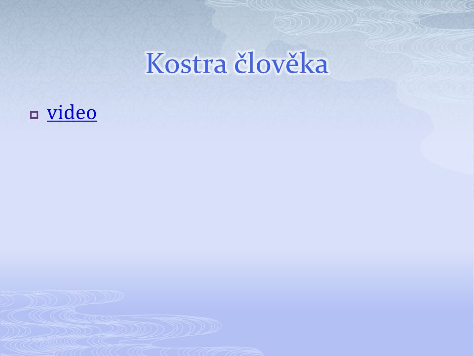 Kostra člověka video