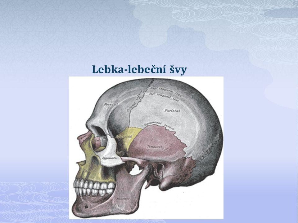 Lebka-lebeční švy