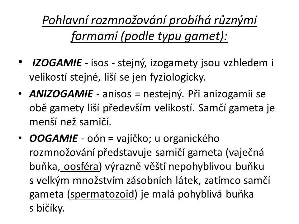 Pohlavní rozmnožování probíhá různými formami (podle typu gamet):
