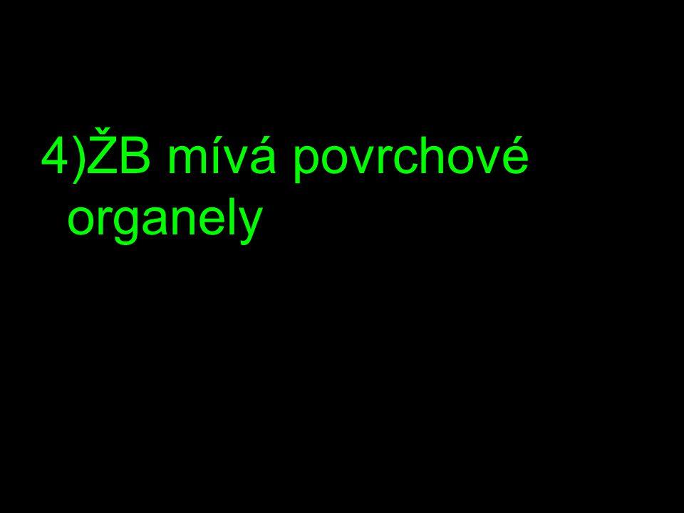 4)ŽB mívá povrchové organely