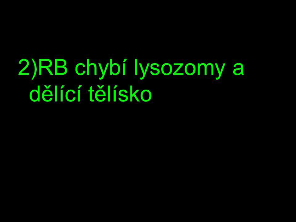 2)RB chybí lysozomy a dělící tělísko