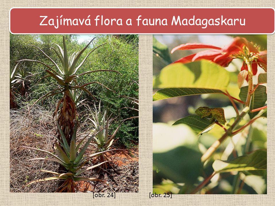 Zajímavá flora a fauna Madagaskaru
