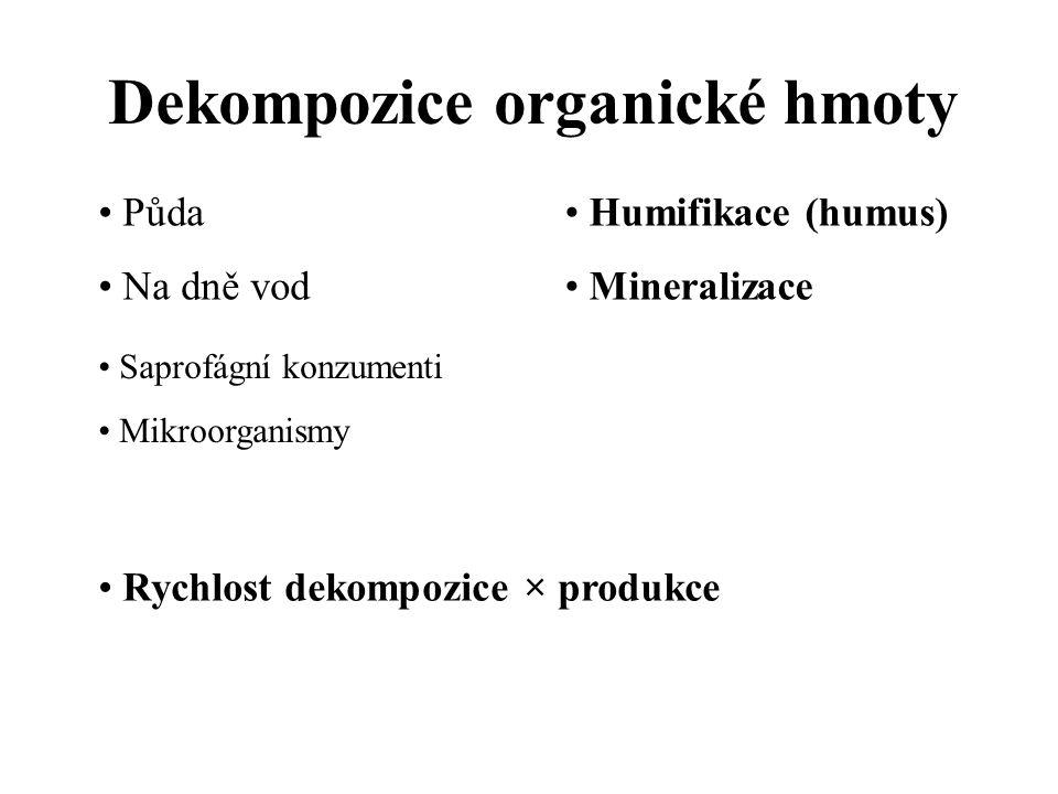 Dekompozice organické hmoty