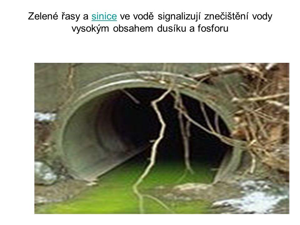 Zelené řasy a sinice ve vodě signalizují znečištění vody vysokým obsahem dusíku a fosforu