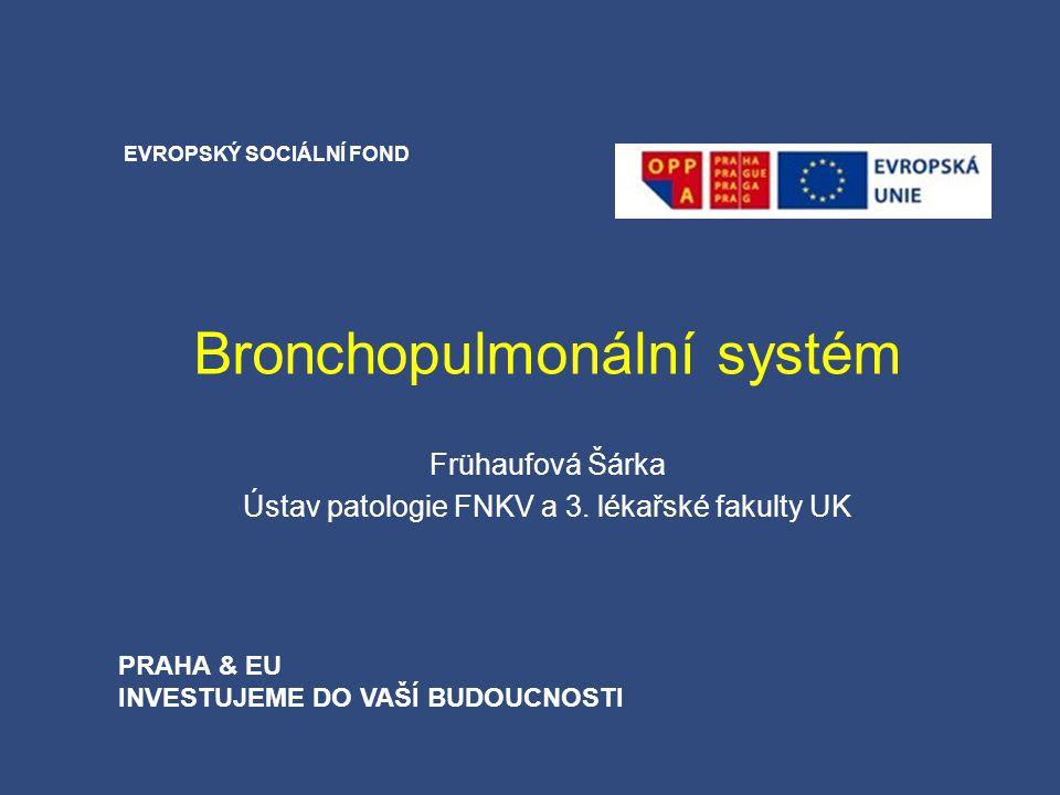 Bronchopulmonální systém