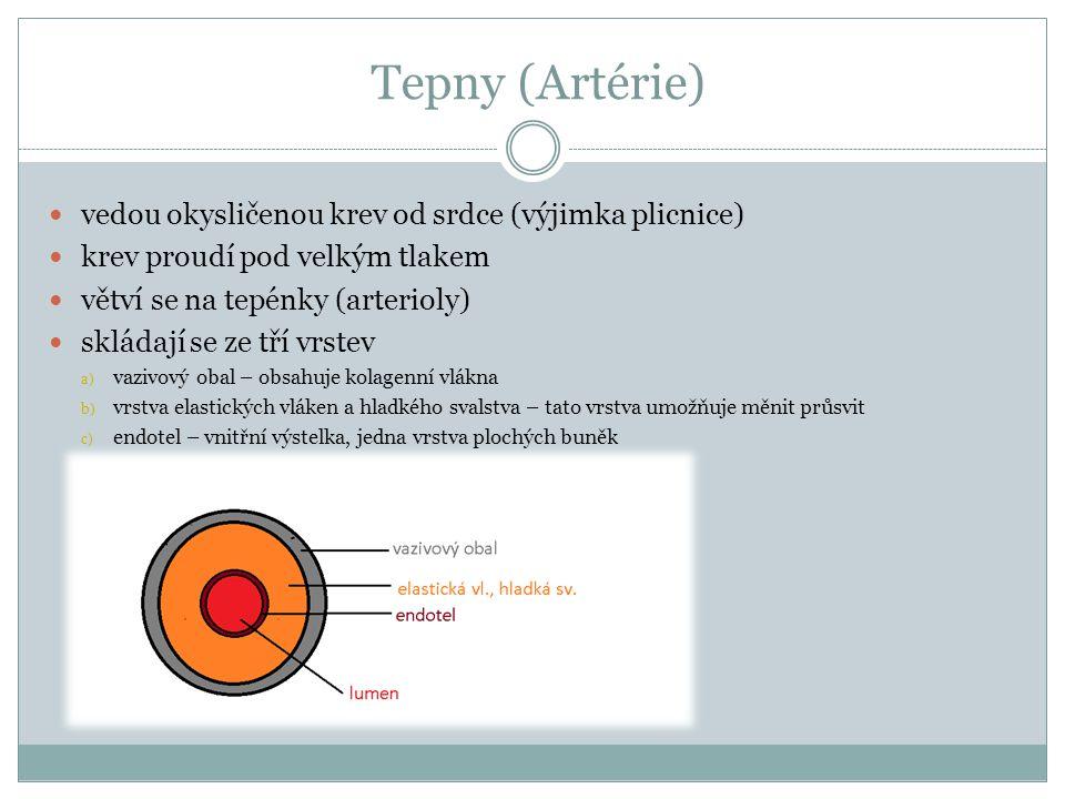 Tepny (Artérie) vedou okysličenou krev od srdce (výjimka plicnice)