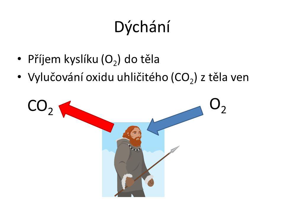 Dýchání O2 CO2 Příjem kyslíku (O2) do těla