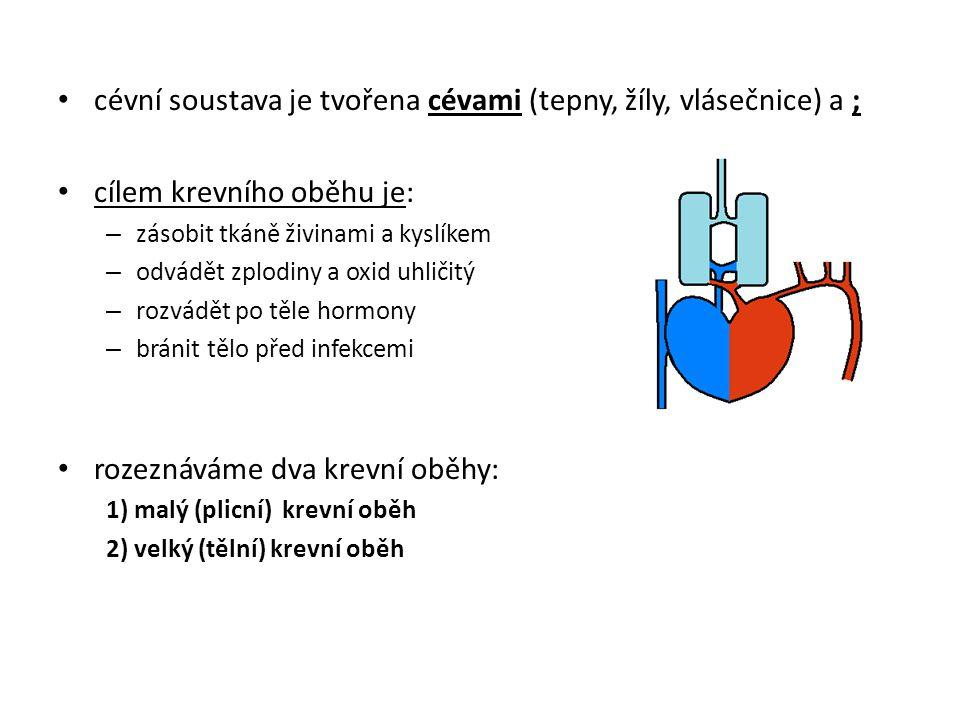 cévní soustava je tvořena cévami (tepny, žíly, vlásečnice) a ;