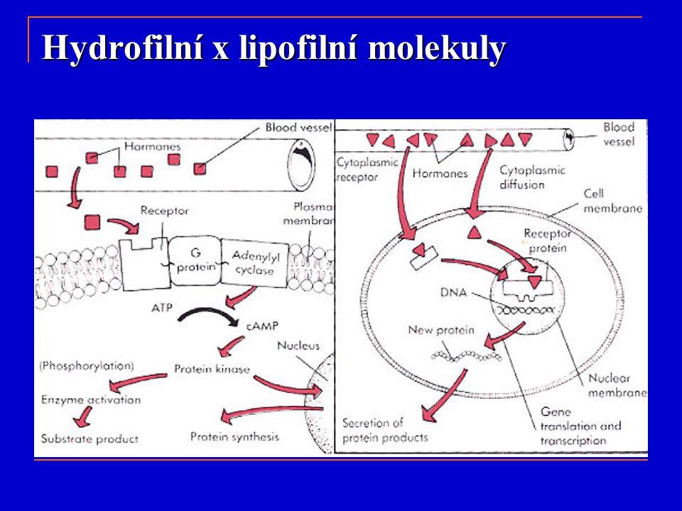 Hydrofilní x lipofilní molekuly