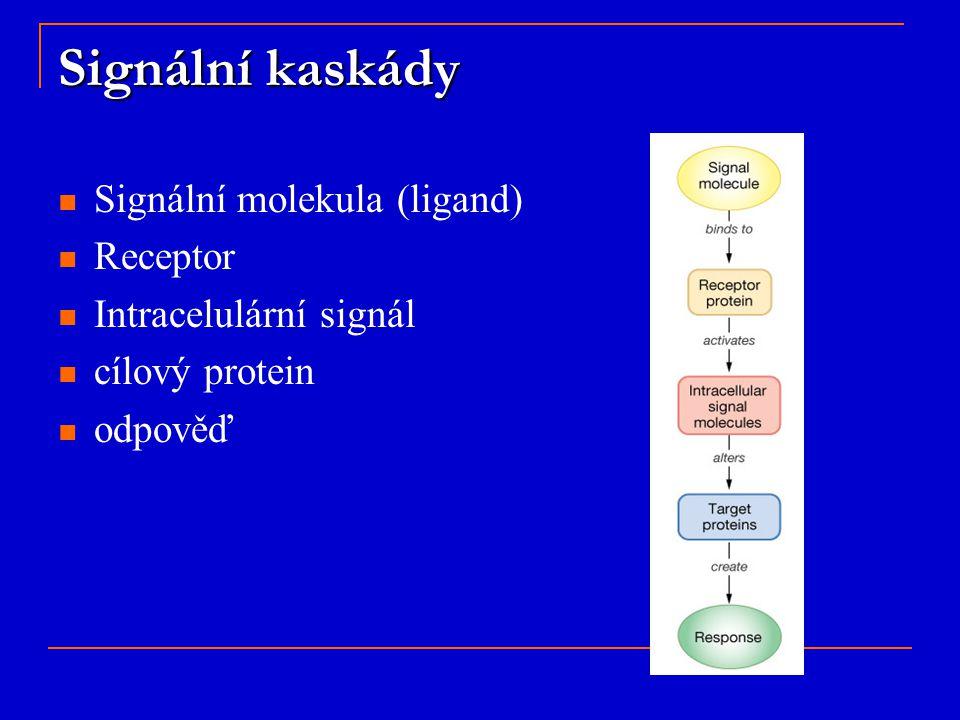 Signální kaskády Signální molekula (ligand) Receptor