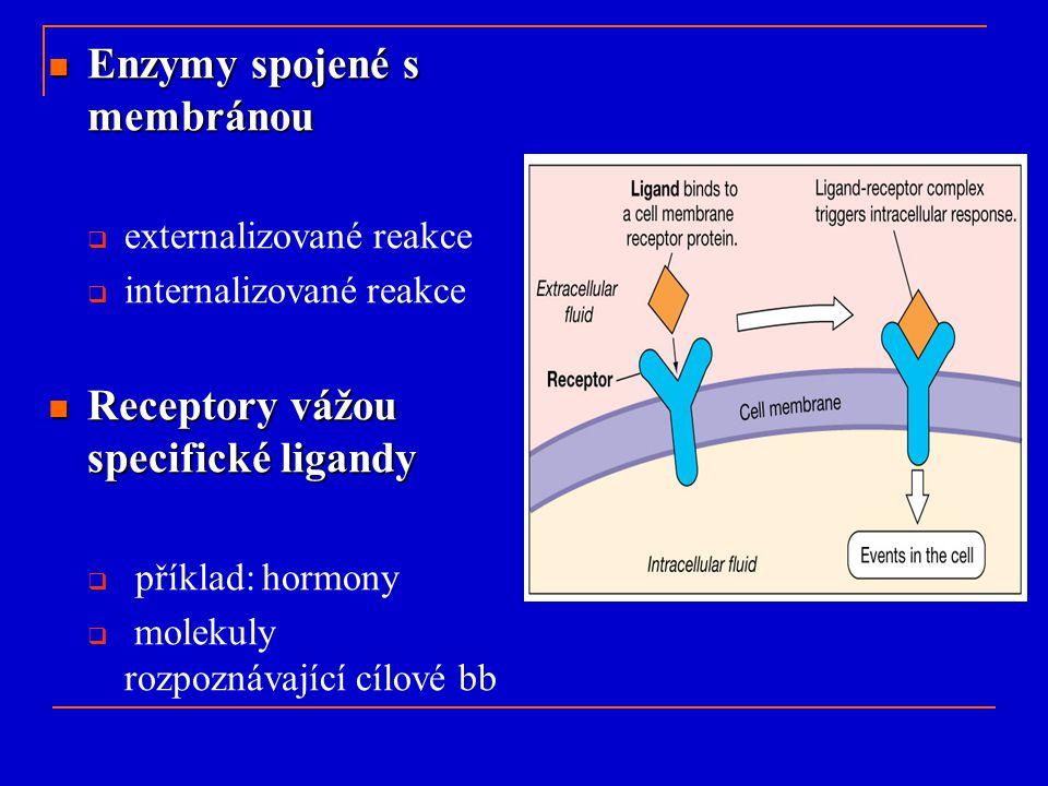 Enzymy spojené s membránou