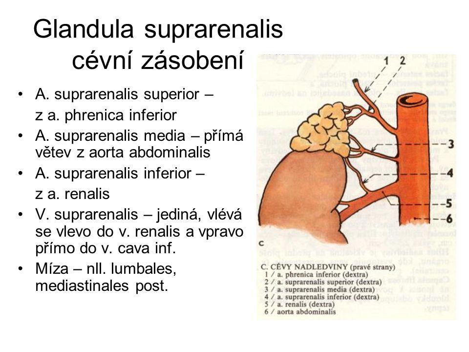 Glandula suprarenalis cévní zásobení
