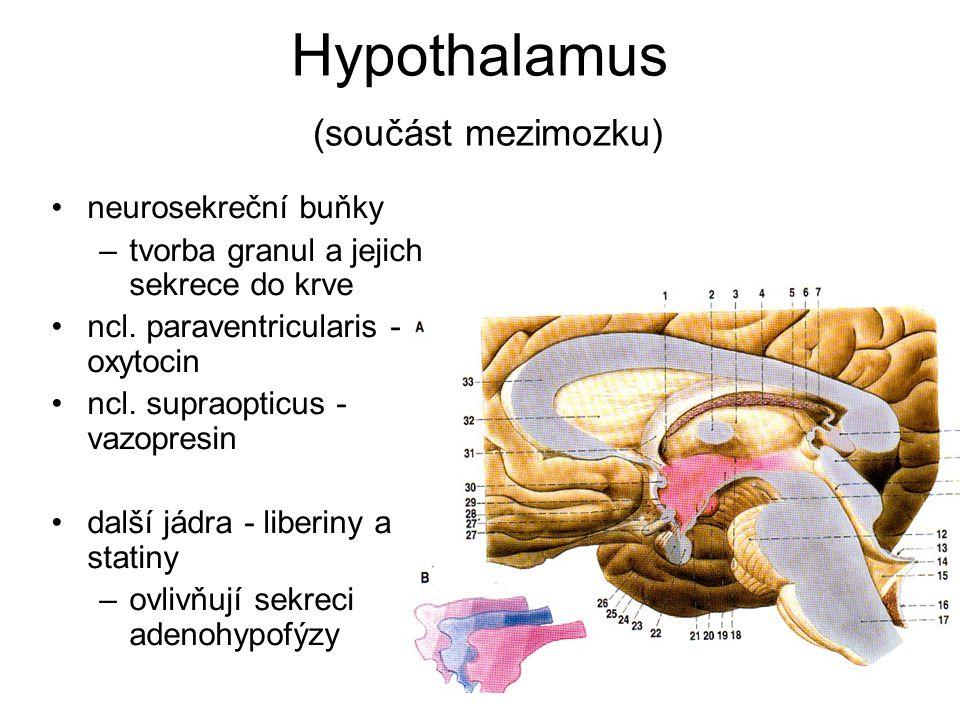 Hypothalamus (součást mezimozku)