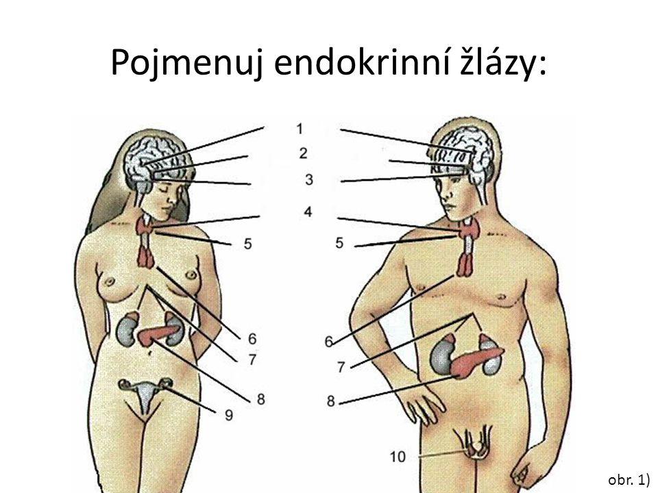 Pojmenuj endokrinní žlázy: