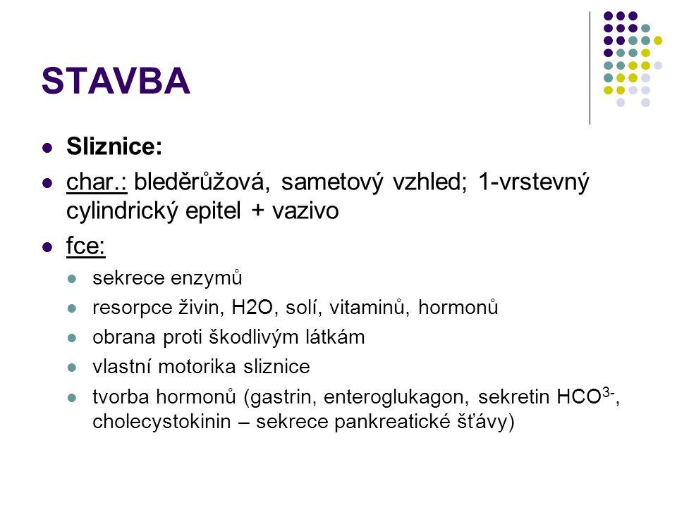STAVBA Sliznice: char.: bleděrůžová, sametový vzhled; 1-vrstevný cylindrický epitel + vazivo. fce:
