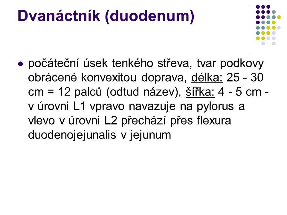 Dvanáctník (duodenum)