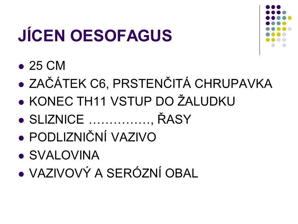 JÍCEN OESOFAGUS 25 CM ZAČÁTEK C6, PRSTENČITÁ CHRUPAVKA