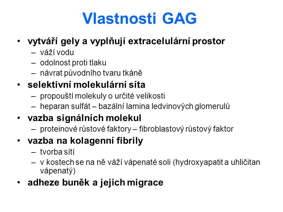 Vlastnosti GAG vytváří gely a vyplňují extracelulární prostor