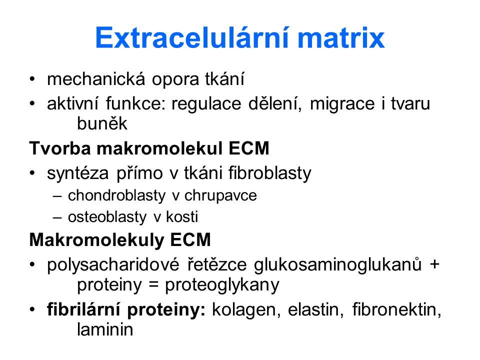 Extracelulární matrix