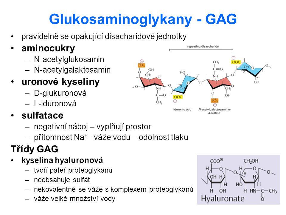 Glukosaminoglykany - GAG