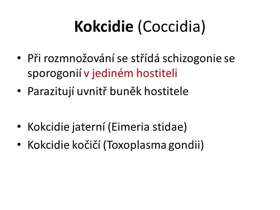 Kokcidie (Coccidia) Při rozmnožování se střídá schizogonie se sporogonií v jediném hostiteli. Parazitují uvnitř buněk hostitele.