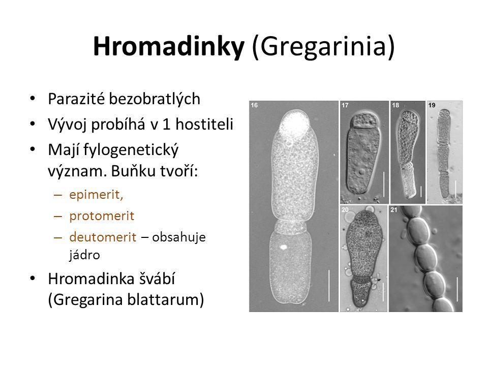 Hromadinky (Gregarinia)