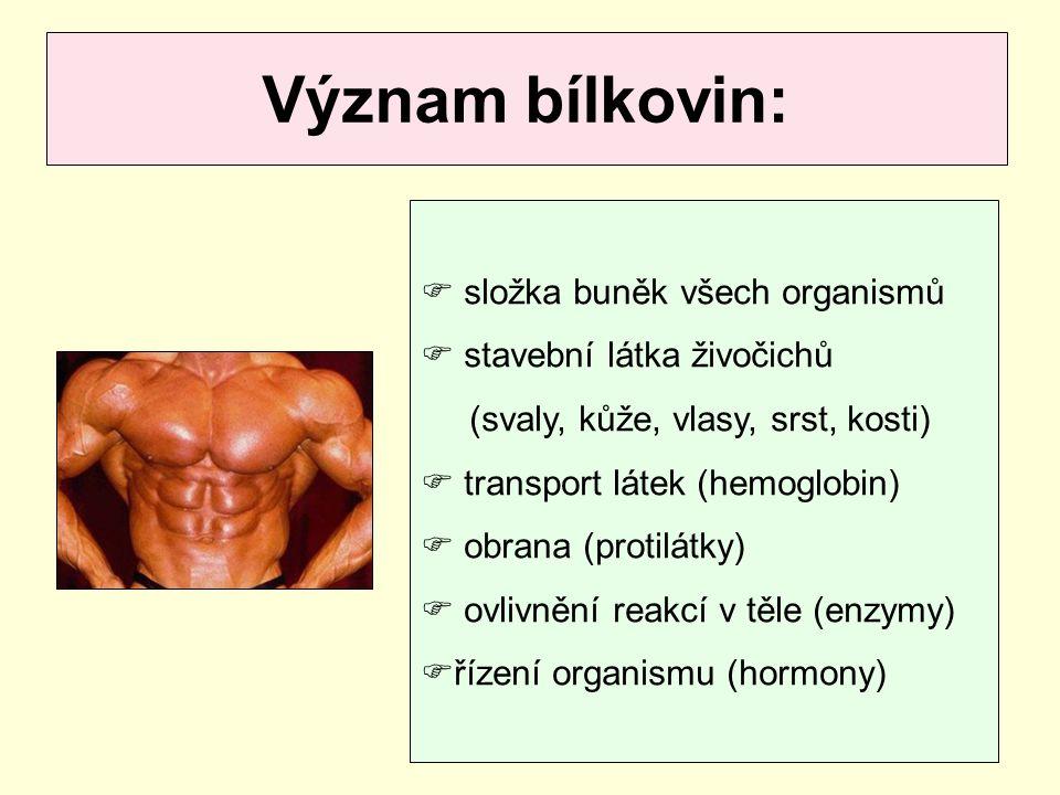 Význam bílkovin: složka buněk všech organismů stavební látka živočichů