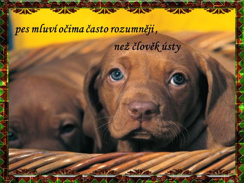 pes mluví očima často rozumněji ,