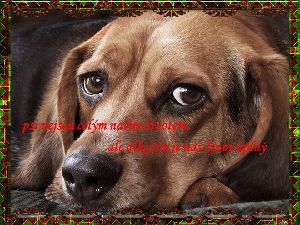 psi nejsou celým našim životem,