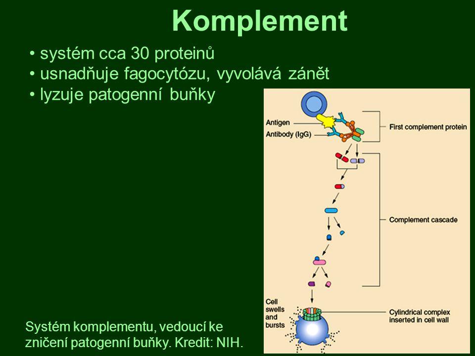 Komplement systém cca 30 proteinů usnadňuje fagocytózu, vyvolává zánět