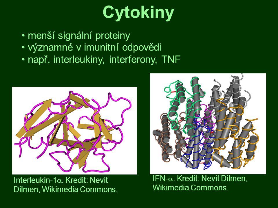 Cytokiny menší signální proteiny významné v imunitní odpovědi