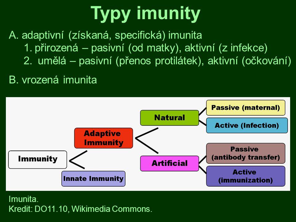 Typy imunity A. adaptivní (získaná, specifická) imunita