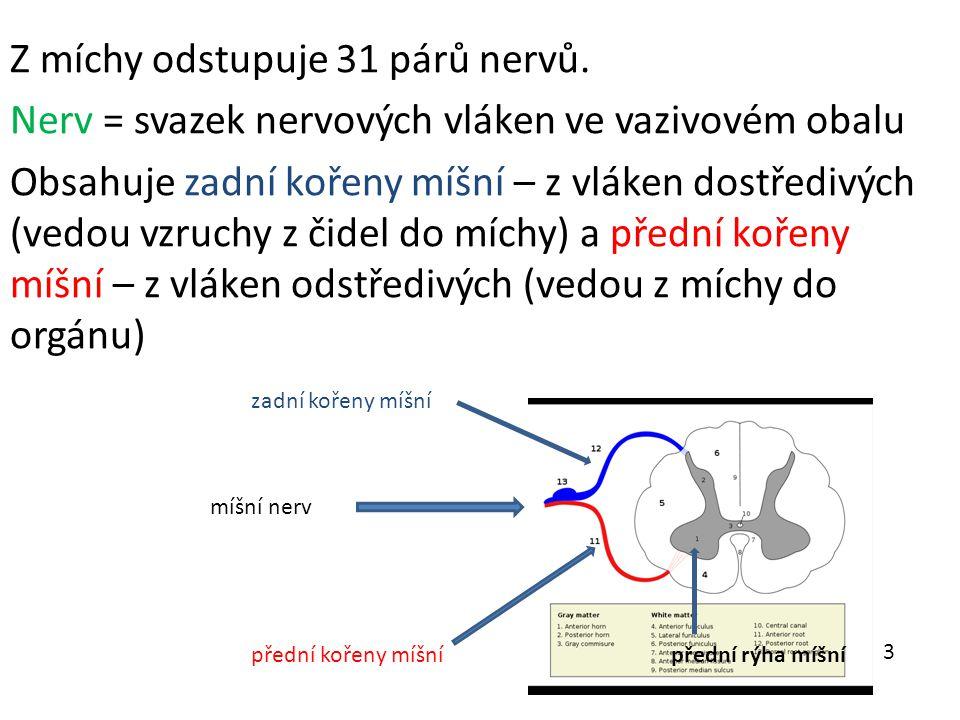Z míchy odstupuje 31 párů nervů