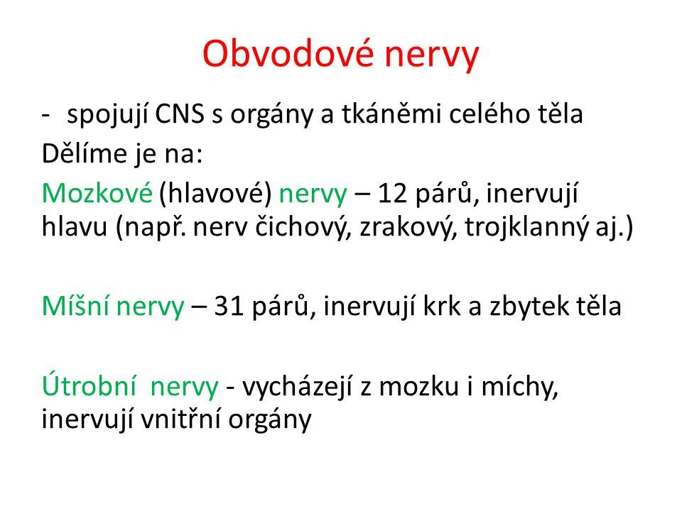Obvodové nervy spojují CNS s orgány a tkáněmi celého těla