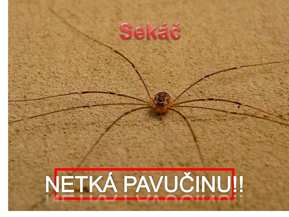 Sekáč NETKÁ PAVUČINU!!