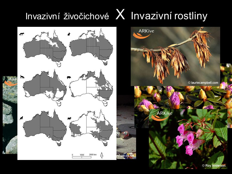 Invazivní živočichové X Invazivní rostliny