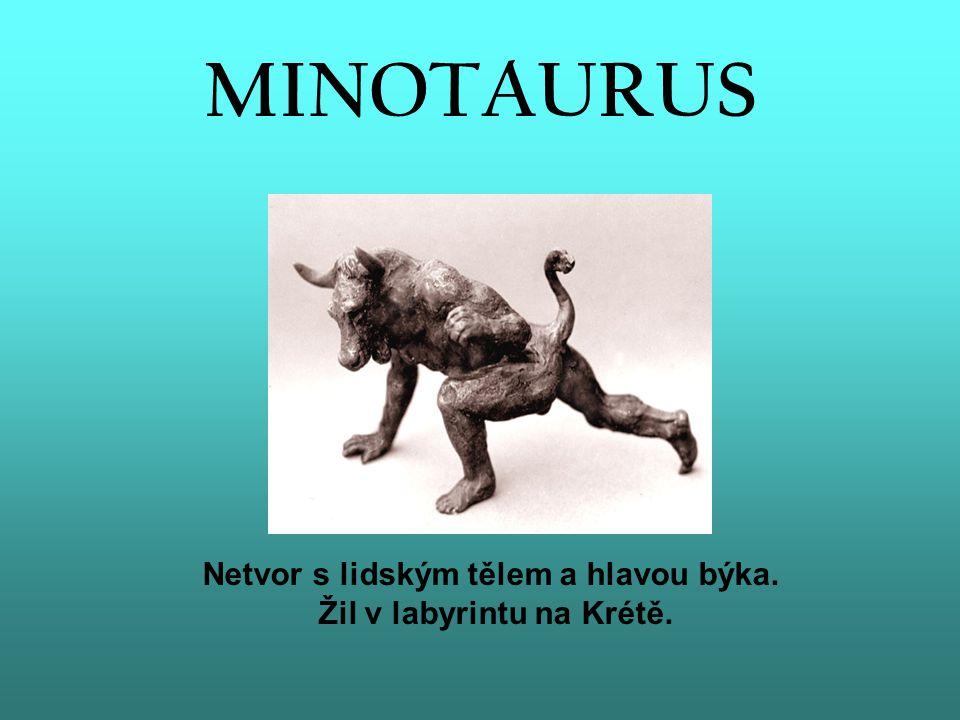 Netvor s lidským tělem a hlavou býka. Žil v labyrintu na Krétě.