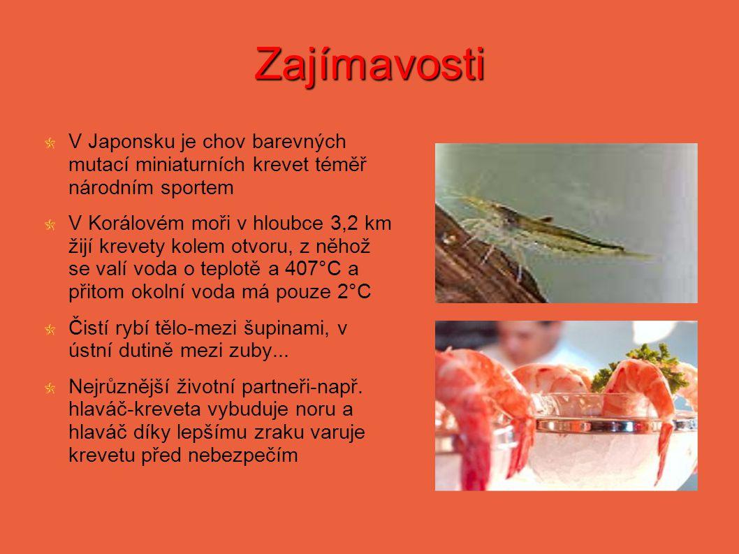 Zajímavosti V Japonsku je chov barevných mutací miniaturních krevet téměř národním sportem.